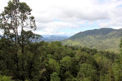 Bosque nuboso en la Reserva científica Ébano Verde. Foto: Tiffany Roufs.